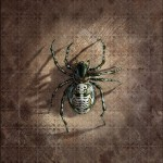 Spider from 'Chamber of Secrets'